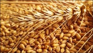 wheat-blendingrice-business_12-5-2015_206351_l